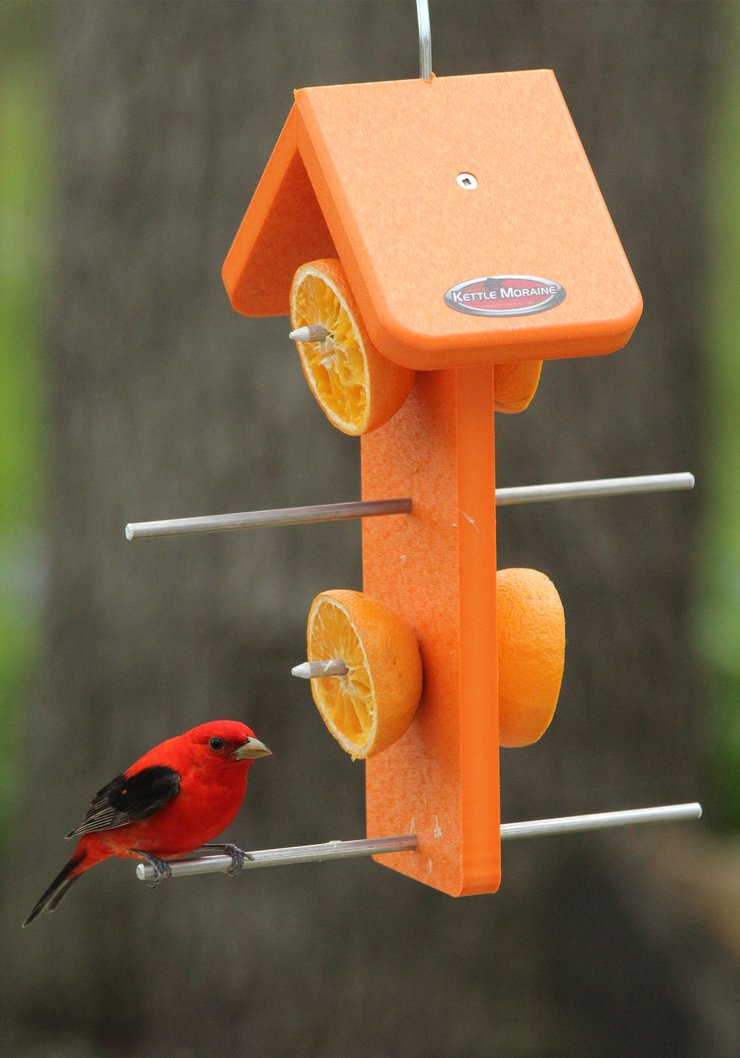 Scarlet Tanager on Oriole Bird Fruit Feeders Garden Decor (Double Sided) Orange
